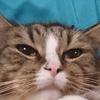 猫アルバム(2020年10月3週目)