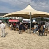 大月町産業祭は盛況、三原村は辿り着けず!
