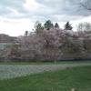春になってきましたね