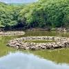 稲取高原クロカンの池(仮称)(静岡県東伊豆)