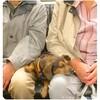 ベルリンの犬の民度が高い