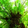 老木と枝葉の緑 受け継がれゆく大地の恵み