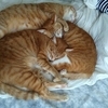 【猫ケア】我が家の猫用爪切りとフード事情