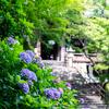 まさに、奈良大和路の花の御寺 「長谷寺」