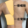 【背筋の鍛え方】筋肉の動きの確認、トレーニング、ストレッチのご紹介