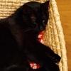 まさにネコ!!それがロカ様です(^^)
