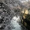 神田川とは?井の頭公園が水源!?桜の名所「江戸川公園」も紹介。
