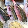 【魚介燻】〜喧噪離れ癒しの揺り籠。子守唄は波の音か〜