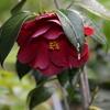 2014/04/23 赤春の台の花色が濃い