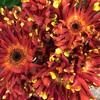 花正のガーデニング