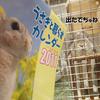 「うさぎと暮らすカレンダー 2011」