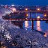 ふくい桜まつり開催  満開のソメイヨシノをライトアップ☆