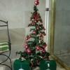 クリスマスツリー登場!