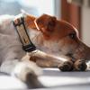 英語で「犬を飼う」って何というのか。飼うって何だろう。