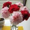 お花の宅急便と1週間後のカーネーション