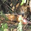 スリランカ旅行20日目・ヤーラ国立公園