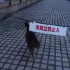 1月後半の #ねこ #cat #猫 その3