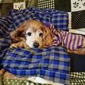 犬マシューにバレずに薬を飲ませるミッションインポッシブル