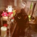 おかしな猫との日常会話レッスン
