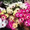 3-351   愛すべき花たち〜2019年春咲き用の種蒔き苗の今〜