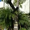 珍しい木…