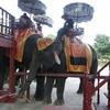 バンコク旅行  ベルトラの午後半日ツアーでアユタヤ遺跡とゾウ乗り体験をしてきました!