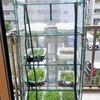 冬でもサラダを食べるために「ビニール温室」を導入。この中に水耕栽培装置を入れて育てます