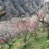月ヶ瀬梅林(奈良)で花と団子に満足