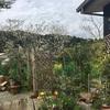 色とりどりの庭と山の幸海の幸♡