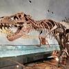 福井県立恐竜博物館に行ってきました