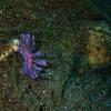 (潜)#679-680 大瀬崎、まだまだ潜るよ