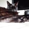 今日の黒猫モモ&白黒猫ナナの動画ー785