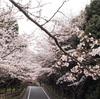 咲ききらない春