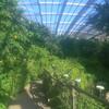 昆虫生態園