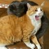 猫の鼻腔内リンパ腫⑰   何にも食べてくれない