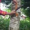 【活動報告】木育ファミリー総会にて、白樺づくしのワークショップを体験しました。