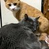 猫の鼻腔内リンパ腫⑦  寛解かな⁉️