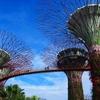 SINタッチじゃないよ!【シンガポール旅行③】手早く攻略!ガーデンズ バイ ザ ベイでスリルとアート