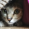 猫はトンネルがお好き♡