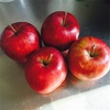 ジョナゴールドでアップルパイ作り