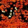 【京都・嵐山】紅葉スポット紹介!天龍寺&宝厳院ライトアップ