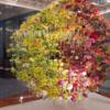 長崎・ハウステンボス、花の世界大会2016