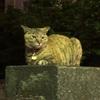 【谷根千No.11】猫の街谷中で猫と触れ合う