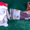 【カスタードエクレア】ファミリーマート 12月3日(火)新発売、コンビニ スイーツ 食べてみた!【感想】