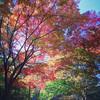 神戸 再度山~布引の滝 紅葉ハイキング