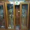 死体博物館はホルマリン漬がいっぱい