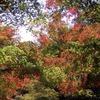 神戸森林植物園。紅葉シーズン2018。