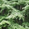 「無常」のお話⑤~不完全な美しさ、『徒然草』にみる「心眼」~「法の水茎」76