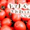 甘~いハート型のミニトマト「トマトベリー」をお取り寄せしたよ【北海道中野ファーム】