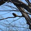ジィちゃんと探鳥、林道台沢線の野鳥たち/2021-02-11